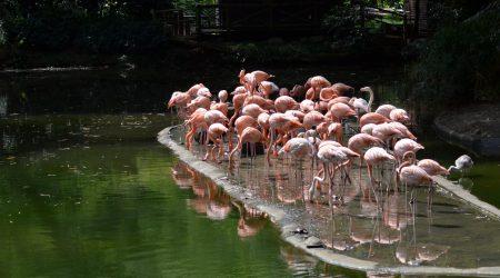 Flamingos_Unsplash