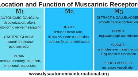MuscarineReceptoren