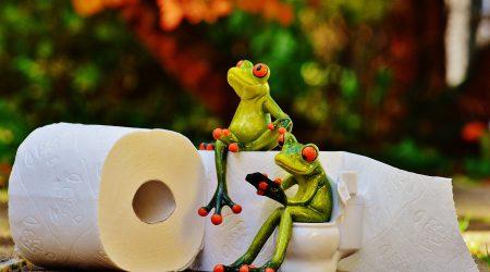 Toilet-kikkers_pixabay